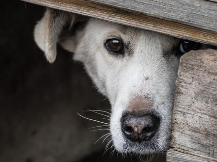 dog-3855224_1920_25.jpg