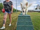 Jetzt Hundetraining buchen und Abgabe sparen!
