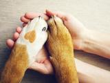 Hundewohl auf 24 Seiten: Neue Broschüre der Tierschutzombudsstelle Wien