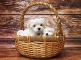 Vorsicht vor 'Lieferservice' für Hundebabies!